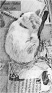 Animal Reiki-Cat